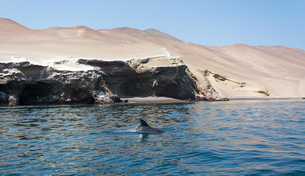 dauphins baie paracas
