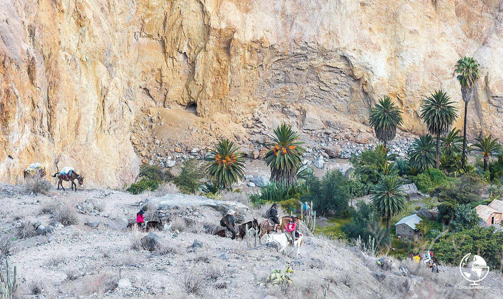 mules canyon colca